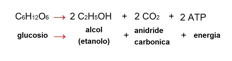 Formula fermentazione alcolica